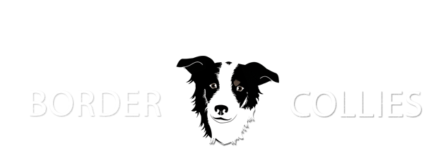 Willow Creek Border Collies